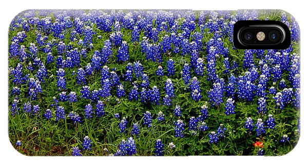 Texas Bluebonnets #0484 IPhone Case