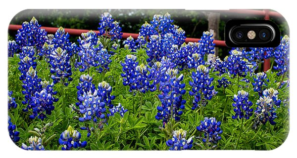Texas Bluebonnets In Ennis IPhone Case
