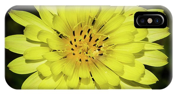 Texas Dandelion IPhone Case