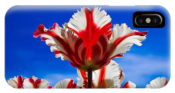 Texas Flame Parrot Tulip IPhone Case