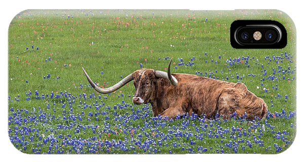 Texas Longhorn And Bluebonnets IPhone Case