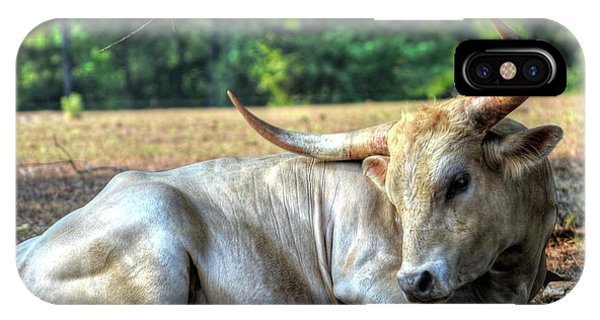 Texas Longhorn Gentle Giant IPhone Case