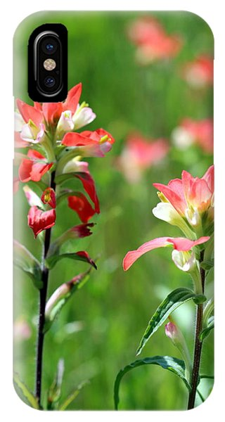 Texas Wildflowers IPhone Case
