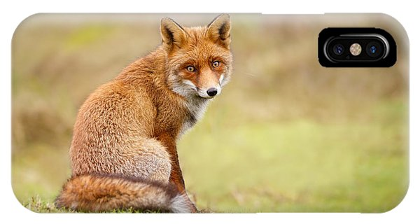 That Look - Red Fox Male IPhone Case