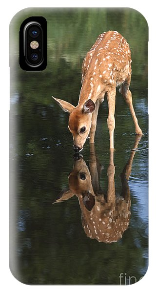 White Tailed Deer iPhone Case - That Must Be Me by Sandra Bronstein