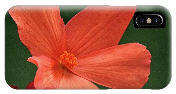iPhone Case - That Orange Flower by Bill Linn
