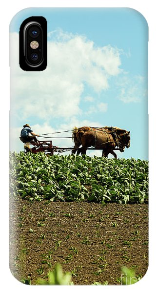 The Amish Farmer With Horses In Tobacco Field IPhone Case