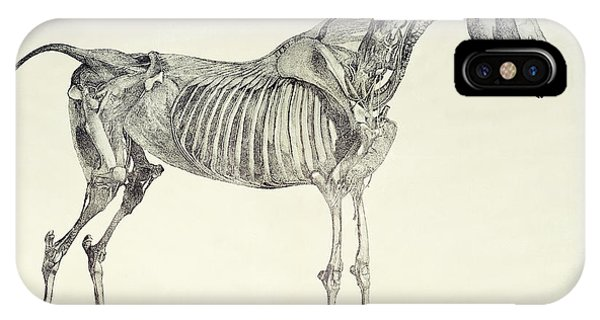 Bone iPhone Case - The Anatomy Of The Horse by George Stubbs