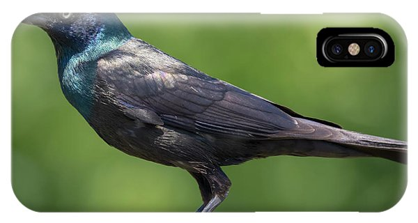 IPhone Case featuring the photograph The Beautiful Common Grackle by Ricky L Jones