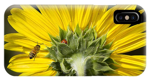 The Bee Lady Bug And Sunflower IPhone Case