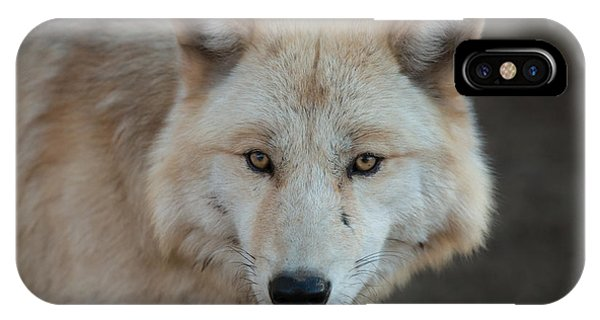 The Big Beautiful Wolf IPhone Case