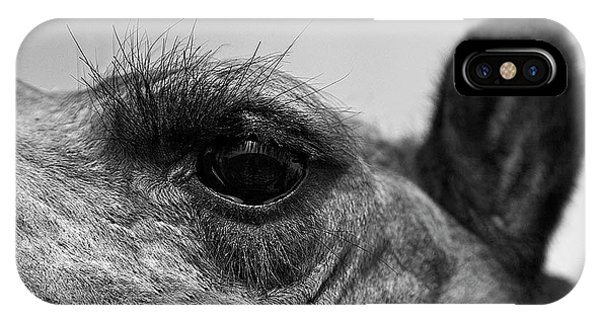 The Camels Eye  IPhone Case