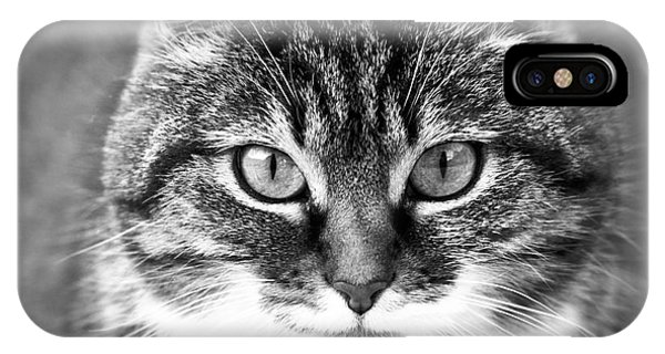 The Cat Stare Down IPhone Case