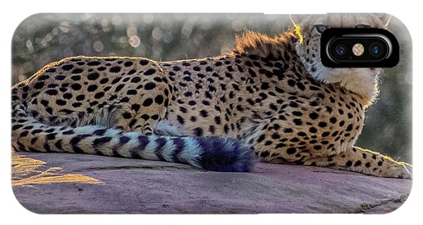 Quick iPhone Case - The Cheetah by Martin Newman