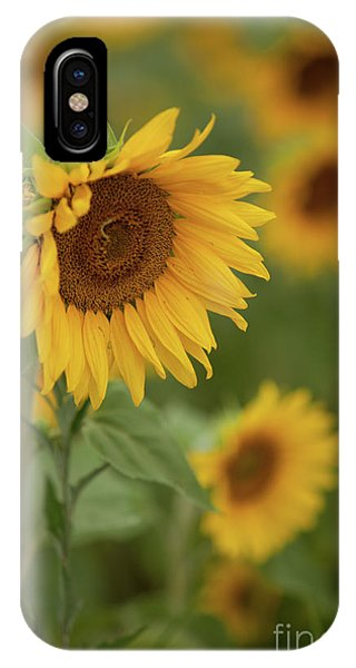 The Close Up Of Sunflowers IPhone Case