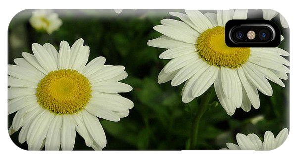 The Common Daisy IPhone Case