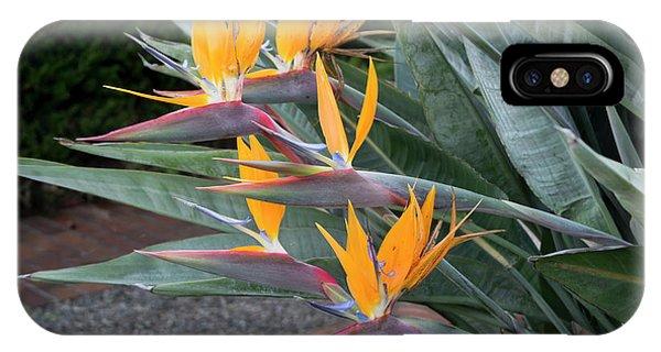 The Crane Flower - Bird Of Paradise  IPhone Case