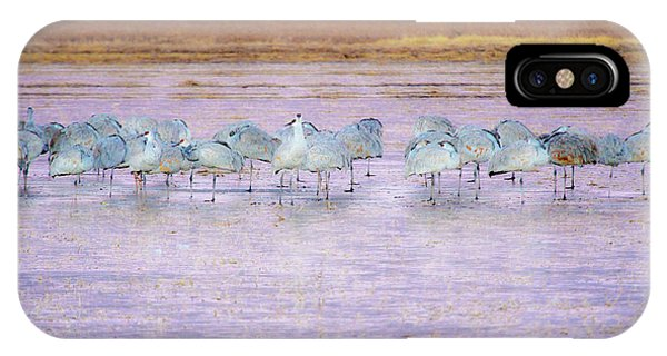The Cranes Of Bosque IPhone Case