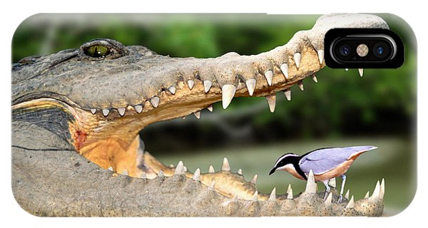 The Crocodile Bird IPhone Case
