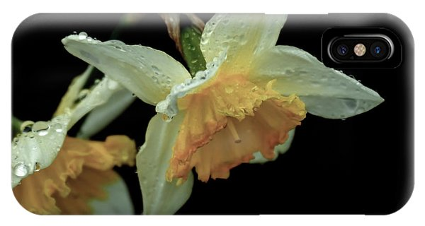 The Daffodil IPhone Case