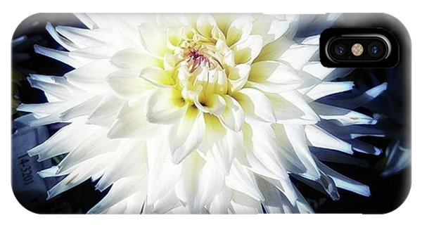 IPhone Case featuring the photograph The Devoted Dahlia. The White Dahlia by Mr Photojimsf