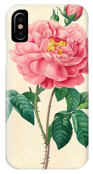 The Duchess Of Orleans Rose IPhone Case