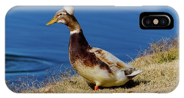 The Duck With The Pillbox Hat IPhone Case