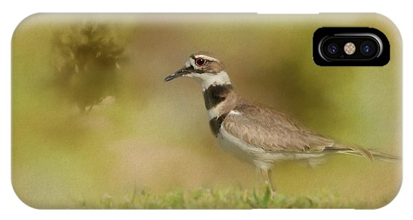 Killdeer iPhone Case - The Elusive Killdeer by Jai Johnson