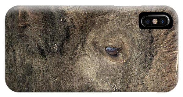 The Eye Of A Bison IPhone Case
