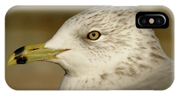 The Eye Of The Seagull IPhone Case