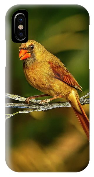 The Female Cardinal IPhone Case