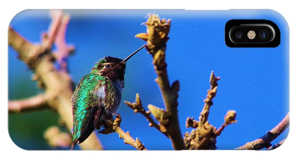 Little Things iPhone Case - The First Hummingbird by Jeff Swan