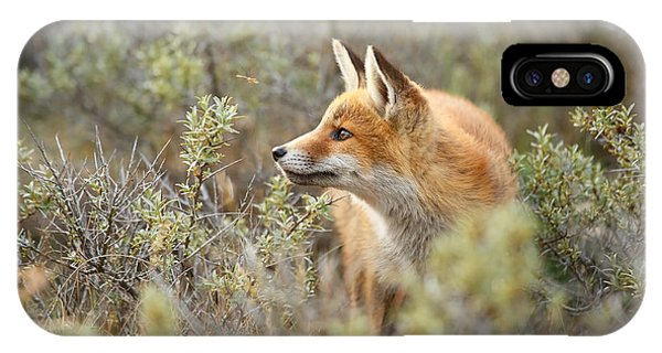 The Fox And Its Prey IPhone Case