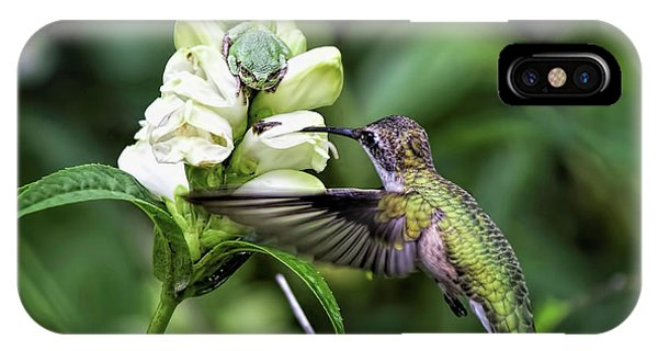 The Frog And The Hummingbird IPhone Case