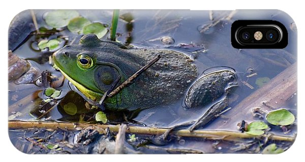 The Frog Remains IPhone Case