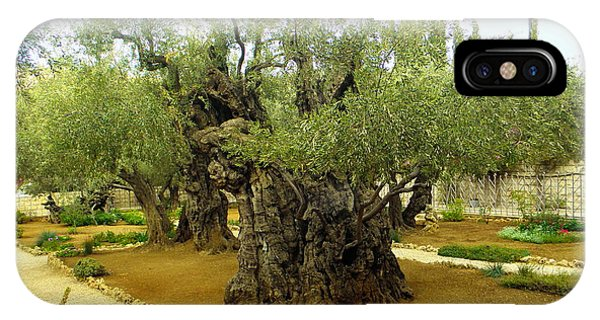 The Garden Of Gethsemane IPhone Case