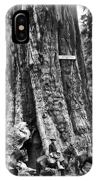 Kings Canyon iPhone Case - The General Grant Tree by Underwood Archives