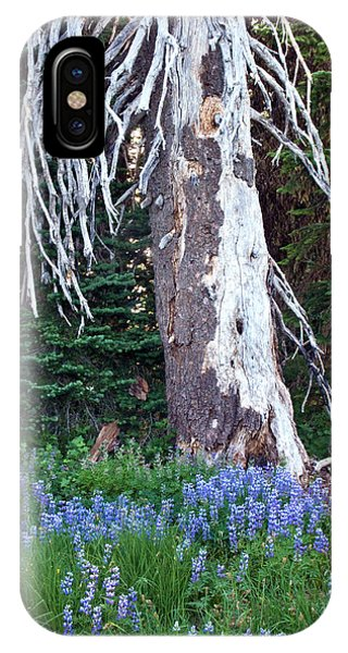 The Ghost Tree IPhone Case