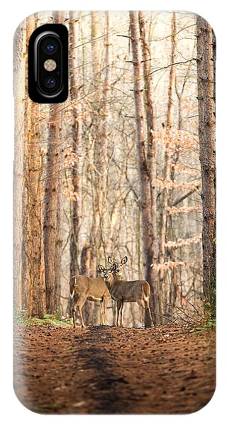White Tailed Deer iPhone Case - The Gift by Everet Regal