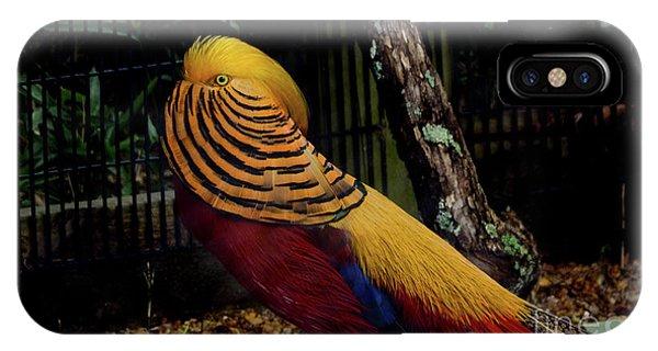 The Golden Pheasant Or Chinese Pheasant -atlanta Ga, Zoo IPhone Case