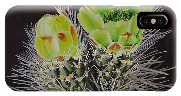 Teddy Bear Cholla iPhone Case - The Green Flowers Of The Teddy Bear Cholla by Amelia Emery