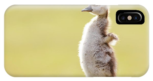 Goslings iPhone Case - The Happy Chick - Happy Easter by Roeselien Raimond