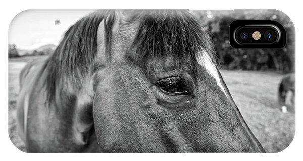 the Horses of Blue Ridge 1 IPhone Case