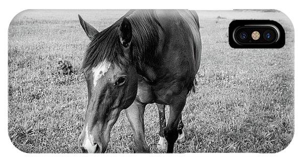 the Horses of Blue Ridge 3 IPhone Case