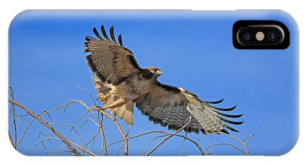 Red Tail Hawk iPhone Case - The Hunt by Donna Kennedy