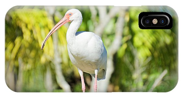 The Ibis Pose IPhone Case