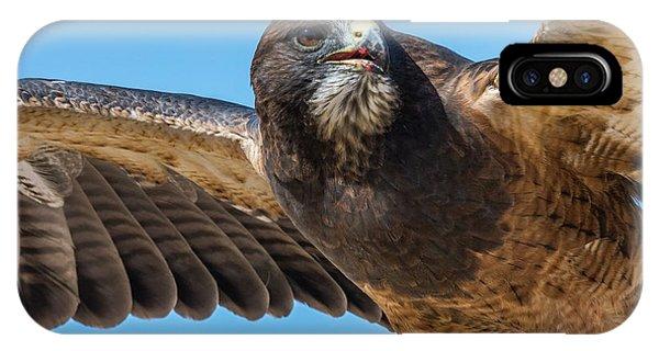 The Kill Wildlife Art By Kaylyn Franks IPhone Case