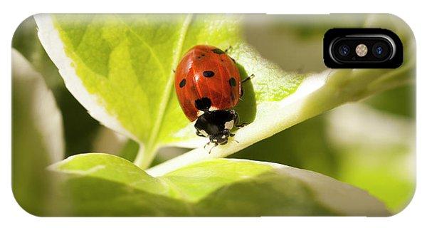 The Ladybug  IPhone Case