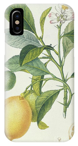 Organic iPhone Case - The Lemon Tree by Pierre Jean Francois Turpin