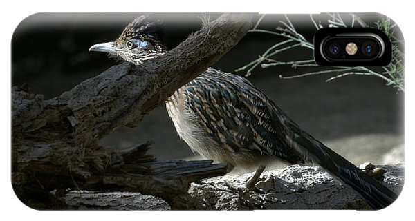 Greater Roadrunner iPhone Case - The Light by Fraida Gutovich